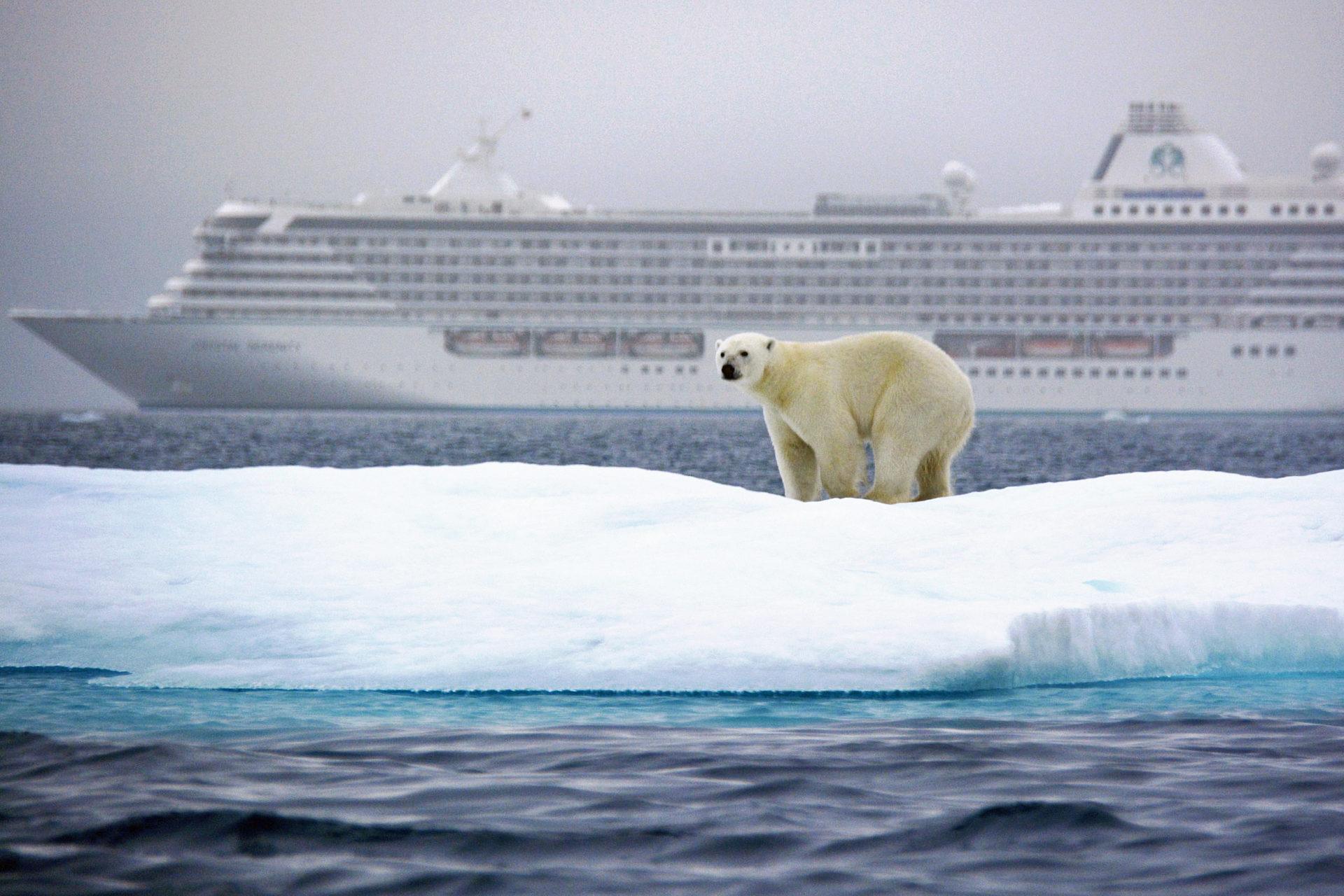 polar-bear-along-the-route